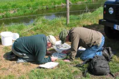 Adult pond dipping
